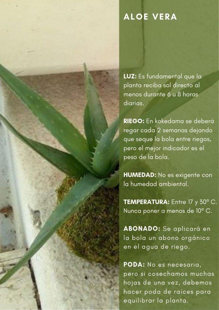 Ficha de la Aloe Vera