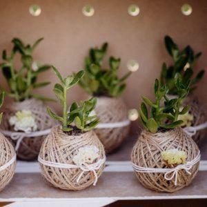 Plantas para bodas