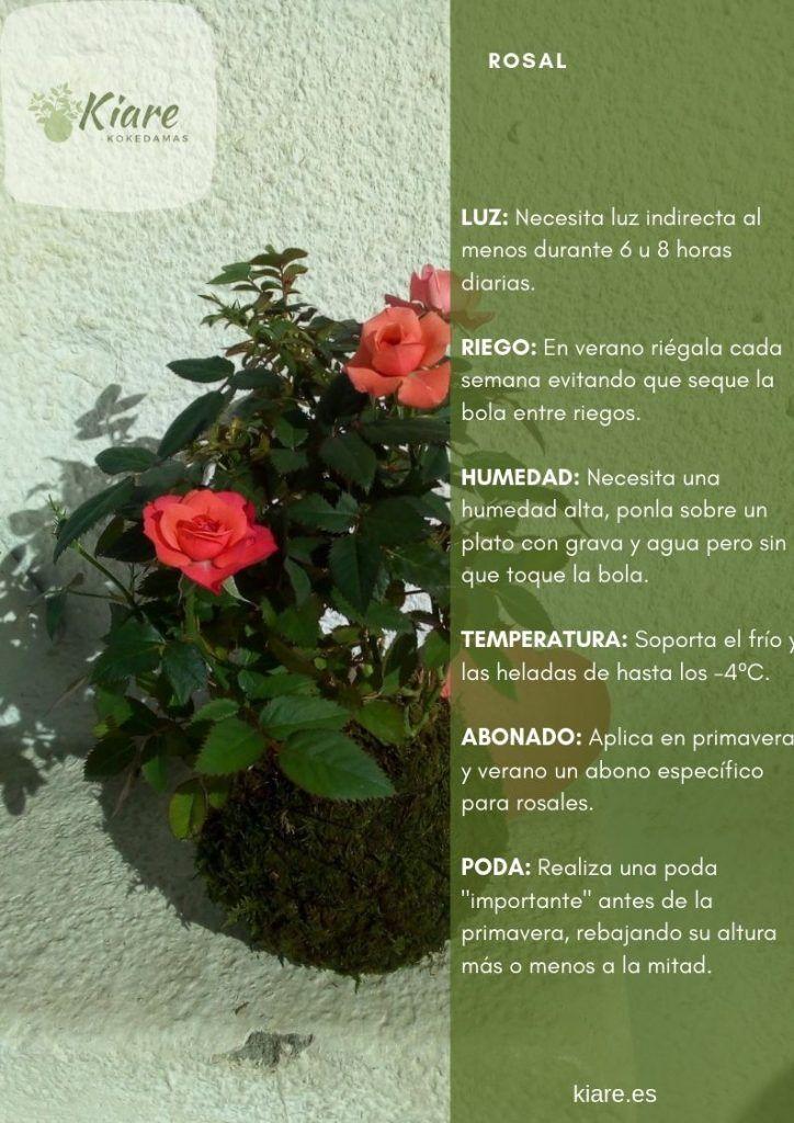 Ficha del Rosal